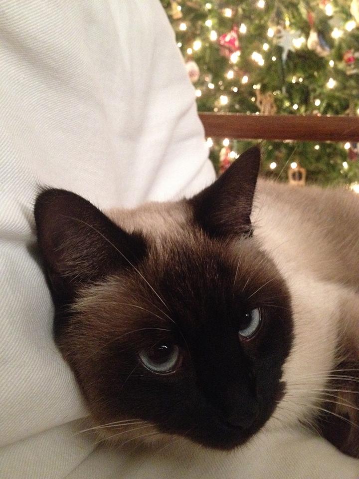 Dinah Christmas 2015