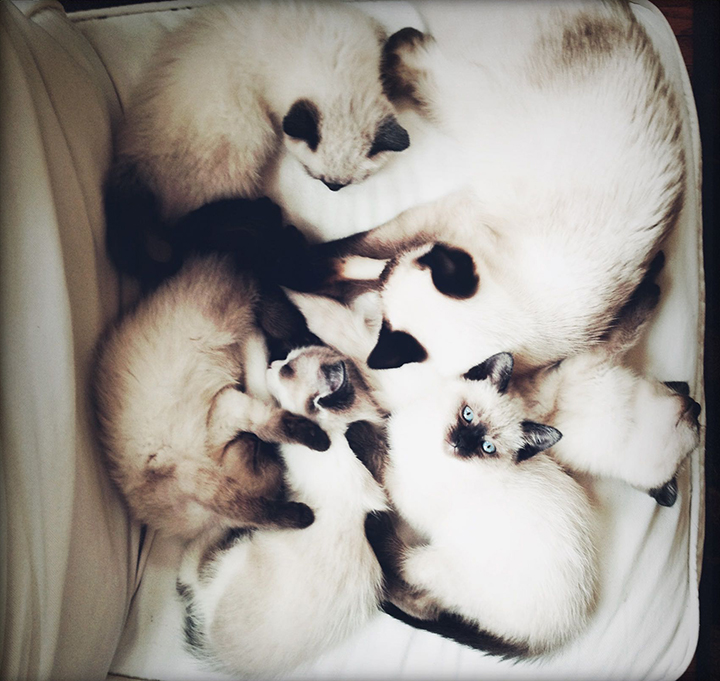 all kittens and dinah white chair