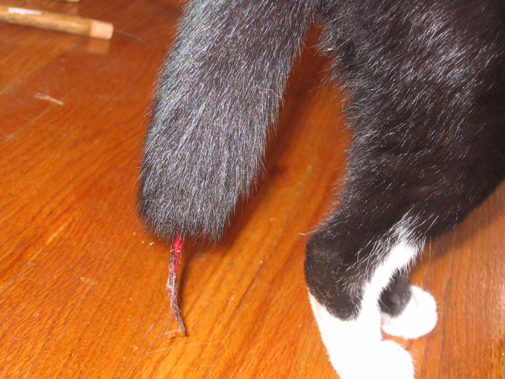 judy-tail