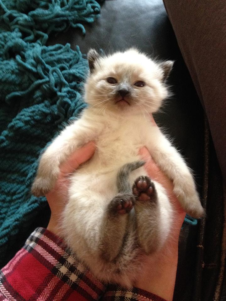 kitten 2015