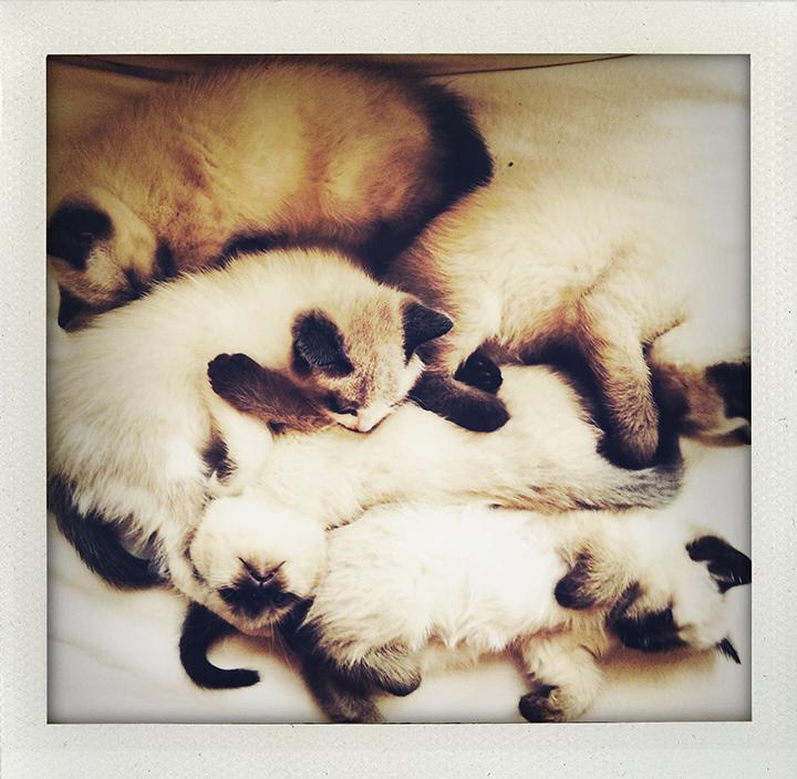 kittens white chair 2015