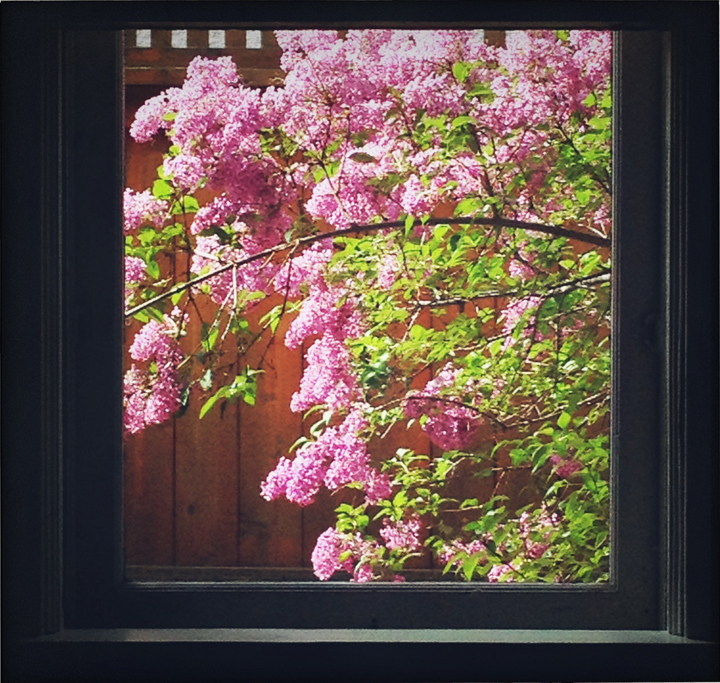 lilacs-from-dining-room-window