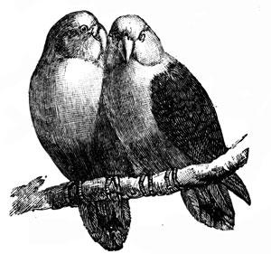*lovebirds_14525