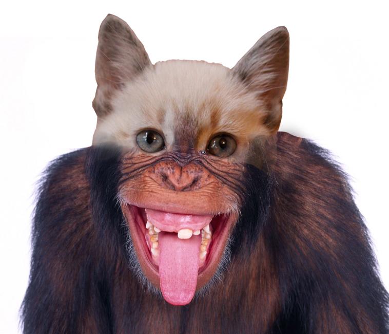 monkey-kitten-photo-2