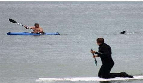 shark-on-cape-kayak