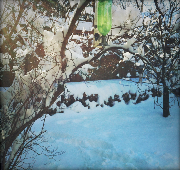 snow-backyard-2012