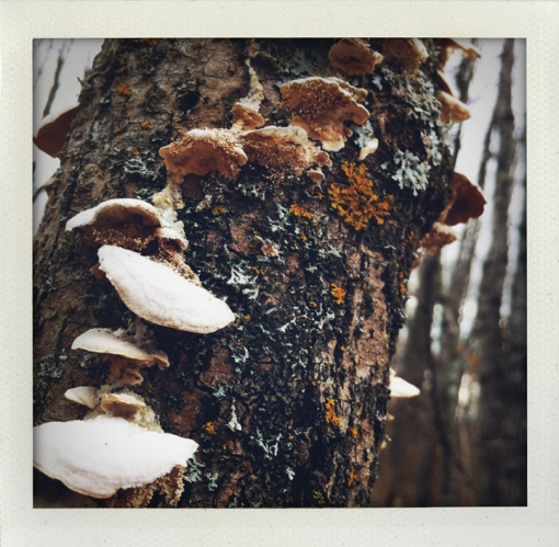 tree-fungi