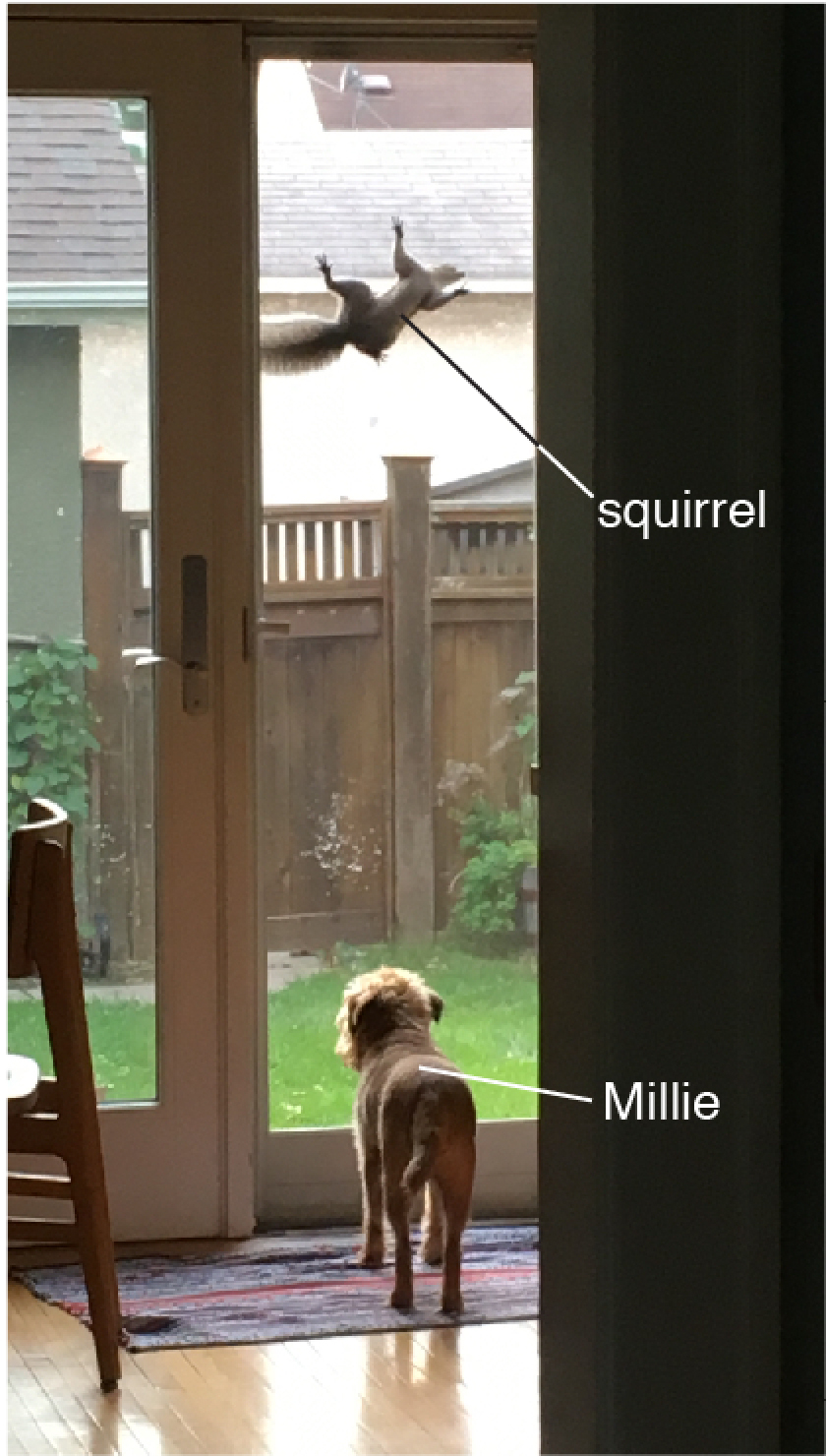 squirrel-millie-words